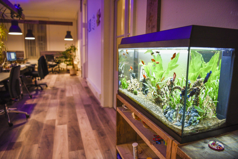 blog_nieuwkantoor_aquarium.jpg
